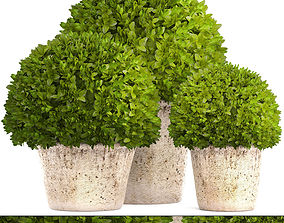3D Topiary bush Buxus