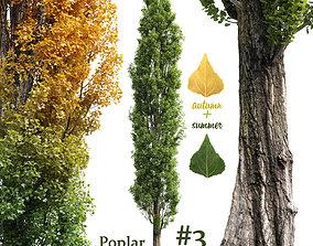3D Poplar Populus nigra V3