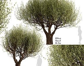 3D model Set of Olive or Olea Europaea Trees - 2