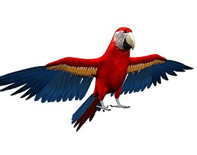 3D Macaw