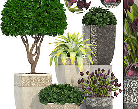 Collection of plants in classic pots 3D model
