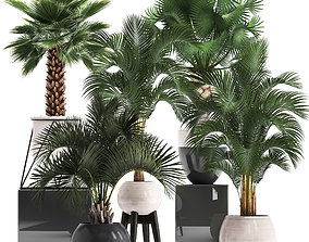 Collection of decorative palm trees 10 3D