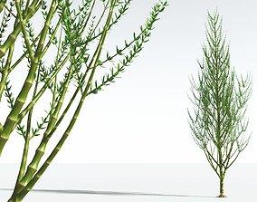 3D EVERYPlant Ridged Horsetail Tree 09 --12