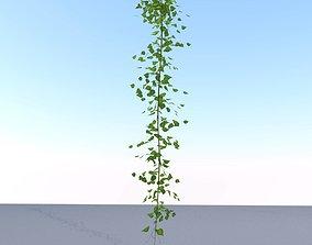 Ivy Vine - Version 12 3D asset VR / AR ready