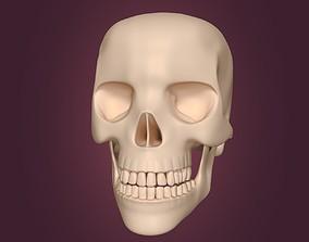 Skull 3D model game-ready