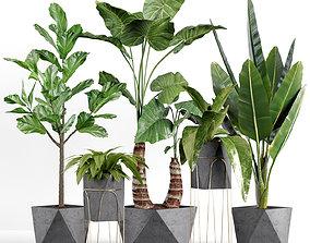 3D Plants collection 07