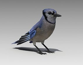 Blue Jay Animated 3D asset