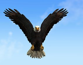 animated 3D Animated Eagle Character