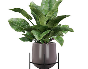 3D philodendron imperial green 01