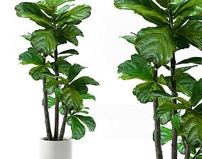 3D Plants 245