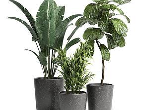 3D model Indoor plant 21