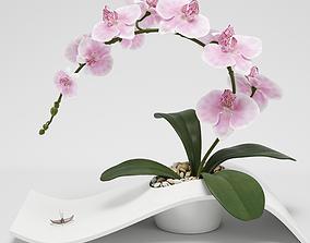 3D Orchid Arrangement