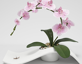 3D Orchid Arrangement