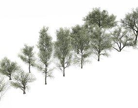 3D model Spring and Summer trees