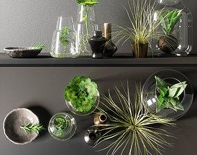 decorative set herbarium 3D