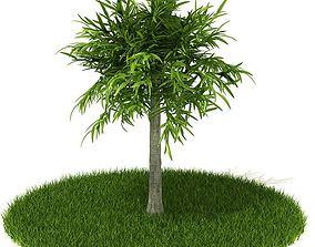 3D Leafy Tree