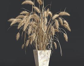 Dry plant 3D model