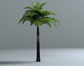 3D THE FOXTAIL PALM - WODYETIA BIFURCATA