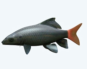 3D model Red Tailed Fish