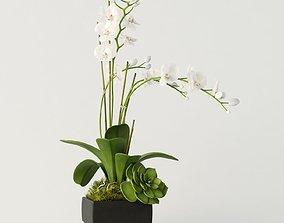 3D orchid 3