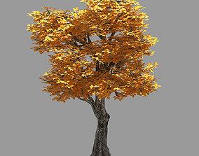 Forest - Populus 003 3D model
