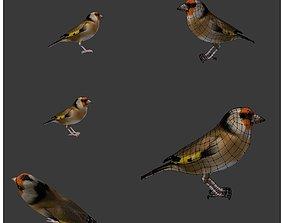 3D bird golden finch 2