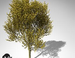 3D XfrogPlants Paloverde