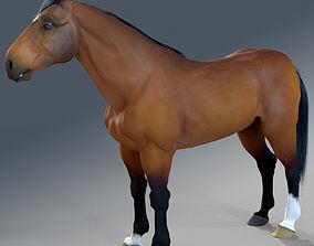 3D Horse - Bay Warmblood