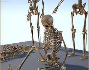 Dungeon Skeleton 3D asset