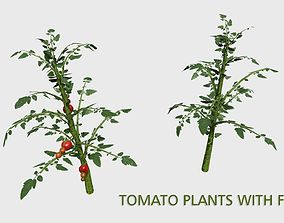 3D model Tomato Plants With Fruit