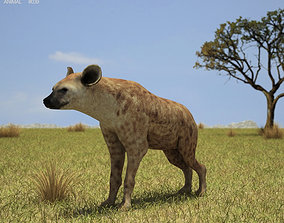 3D model Spotted Hyena Crocuta Crocuta