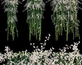 3D model Vernonia Elliptica - Curtain Creeper 05