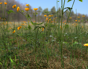 3D model Creeping Buttercup Flower Meadow Patch