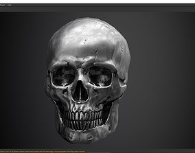 3D model skull PBR textures and low poly and high