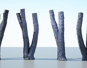 3D model Tree Trunk - 06