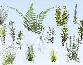 Small plant set 3D model