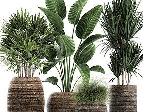 Decorative plants in a basket 823 3D model