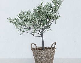 Olive tree in a basket 3D model