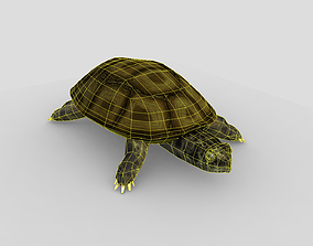 Swamp Turtle 3D asset