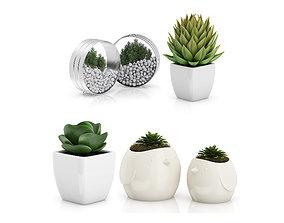 3D model Small plants