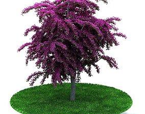 3D Purple Leafy Weeping Tree
