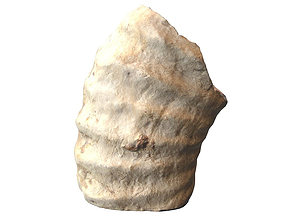 Huge Fossil Ammonite 3D asset