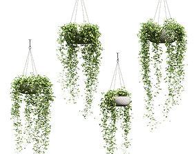 Ivy in hanging pots - 4 models