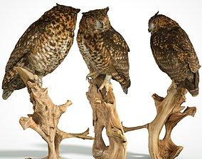 3D asset Bubo Capensis Owl