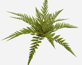 Low Poly Common Fern 3D model