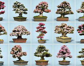15 Satsuki Bonsai Tree Blossom Collection 3D model