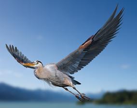 2020 Great blue heron-Ardea herodias 3D animated