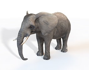 Elephant Rigged 3D model
