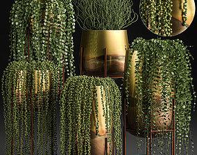 Succulents in a flowerpot for interior design 543 3D model