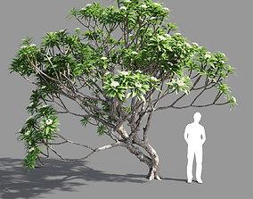 3D Plumeria